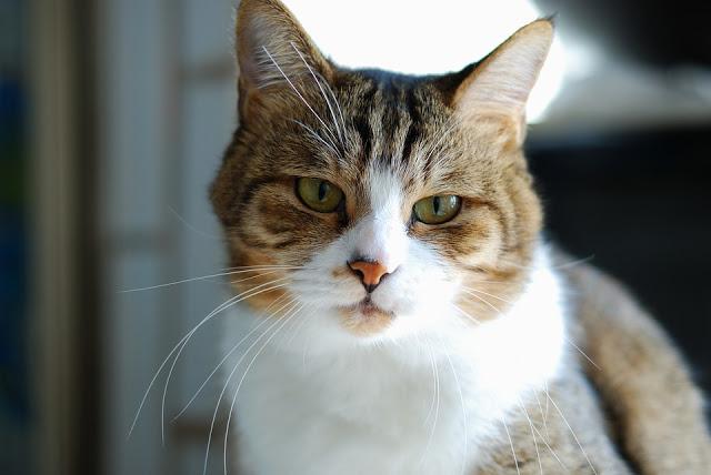cat 1091521 960 720 2 - 【国内/時事ネタ/リキッド】最近出回っている偽物のリキッド(クローンリキッド)と有志によるその対策活動について【Nasty Juice/ナスティジュース】