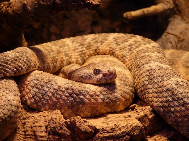 spotted rattlesnake 54002 960 720 2 - 【国内/時事ネタ/リキッド】最近出回っている偽物のリキッド(クローンリキッド)と有志によるその対策活動について【Nasty Juice/ナスティジュース】