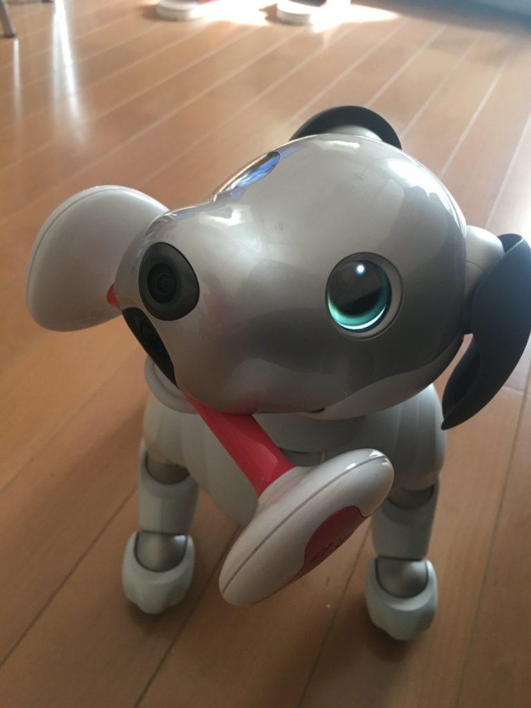 IMG 2251 e1516327062859 768x1024 - 【レビュー】「aiboがきた!」愛犬電脳ロボットアイボとの愛あるわんこ生活!【ガジェット/アイボ/aibo/SONY】