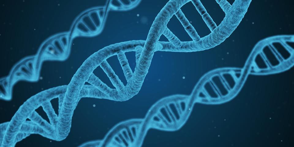 dna 1811955 960 720 - 【NEWS】電子タバコはDNAに影響を与える?ニューヨーク大学の研究成果について