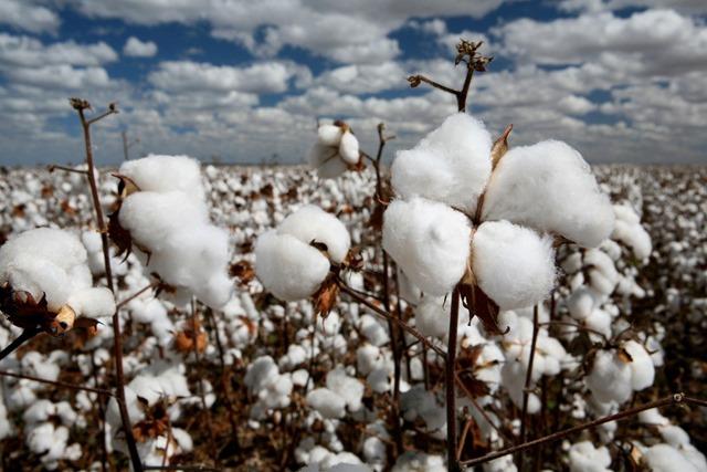 cotton importers indonesia thumb - 【レビュー】「Titanium Fiber Cotton(チタニウムファイバーコットン)」レビュー。吸水性、耐水性に優れるリキッド供給速度抜群の100%インドネシア産コットン!Promist Vaporさんおススメ!ケンドーコットンとの比較もあるよ