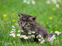 kitty 2948404 1920 202x150 - 【TIPS】VAPEと猫は相性最悪!?その原因はPGが関係していた!