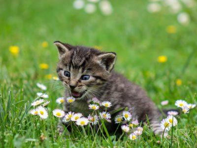 kitty 2948404 1920 400x300 - 【TIPS】VAPEと猫は相性最悪!?その原因はPGが関係していた!