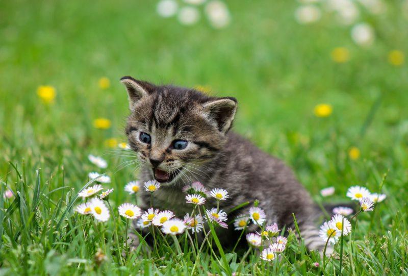 kitty 2948404 1920 e1549600307440 - 【TIPS】VAPEと猫は相性最悪!?その原因はPGが関係していた!