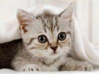 img eb31afc9c1fb914d68a7c73b657c 202x150 - 【悲報】まんさん、猫ちゃんを洗濯機で洗ってしまう