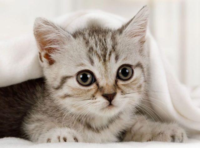 img eb31afc9c1fb914d68a7c73b657c 640x475 - 【悲報】まんさん、猫ちゃんを洗濯機で洗ってしまう