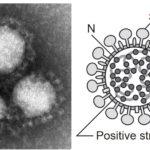 corona fig1 150x150 - 【日本】コロナワクチンの接種無料に…関連法成立、国民には接種の努力義務… ★2 [BFU★]