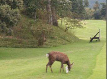 IMAG6044 thumb 343x254 - 【訪問】鹿とゴルフと三重白山ゴルフコースとテーラーメードRBZクラブとミズノスピードボールをレビュー